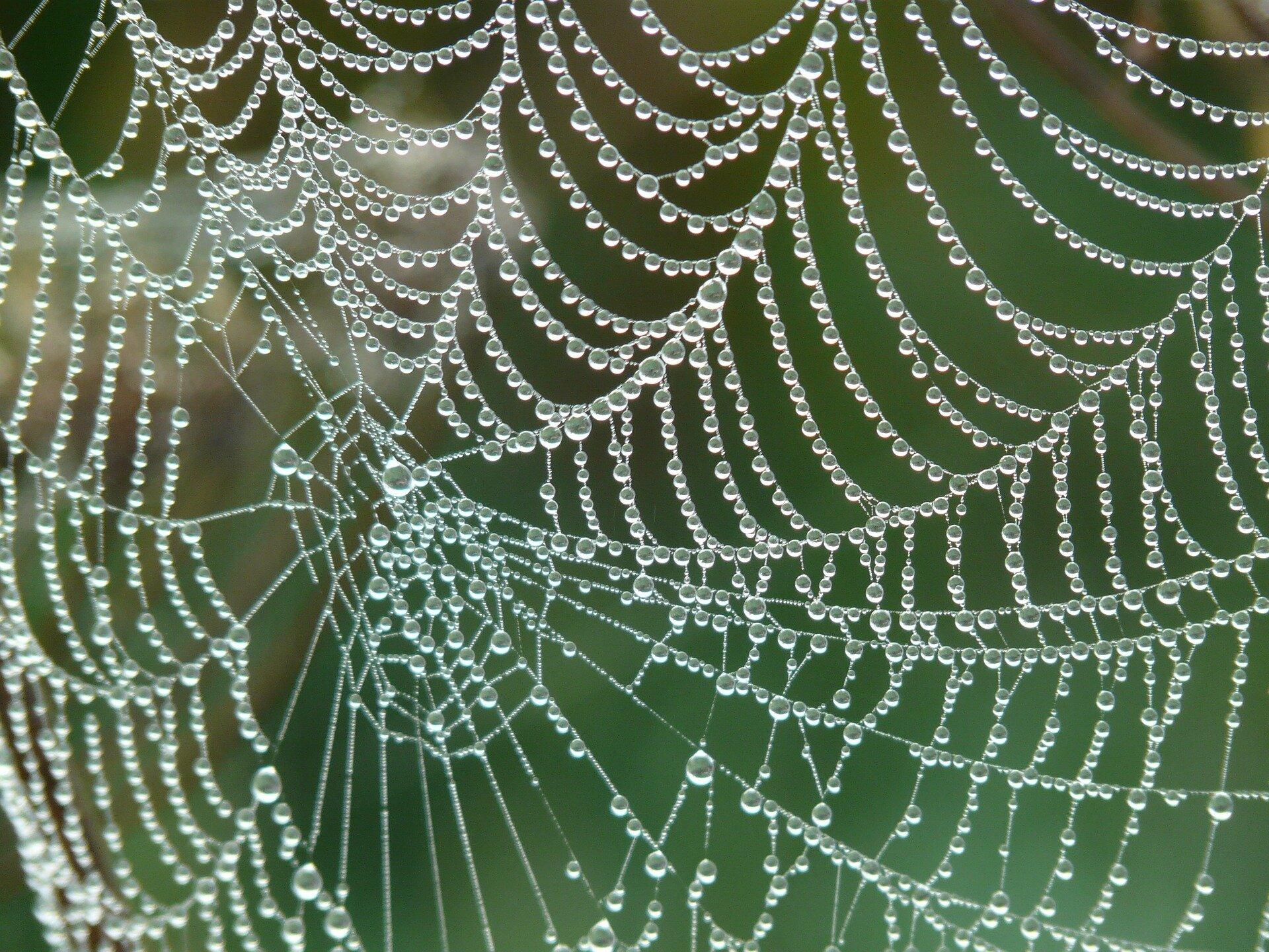 Pókhálóból golyóálló mellény? Biomimetika!